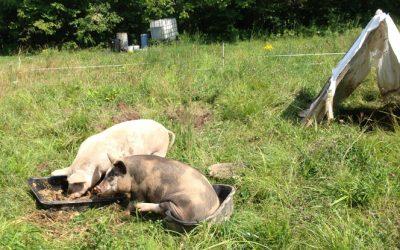 Farm, Family, Fabric, and Piggy