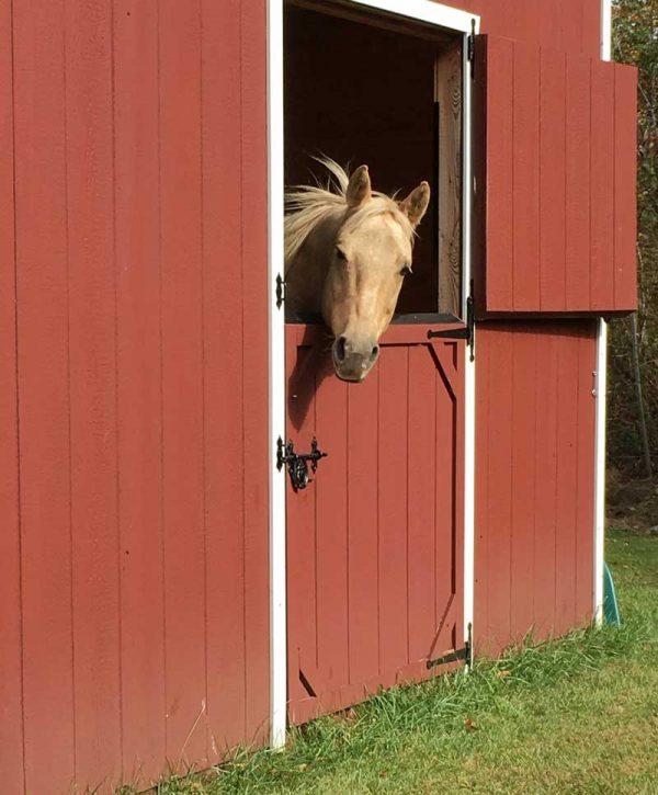 original horse photo for fabric portrait