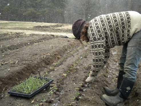 Kara plants onions at the old farm